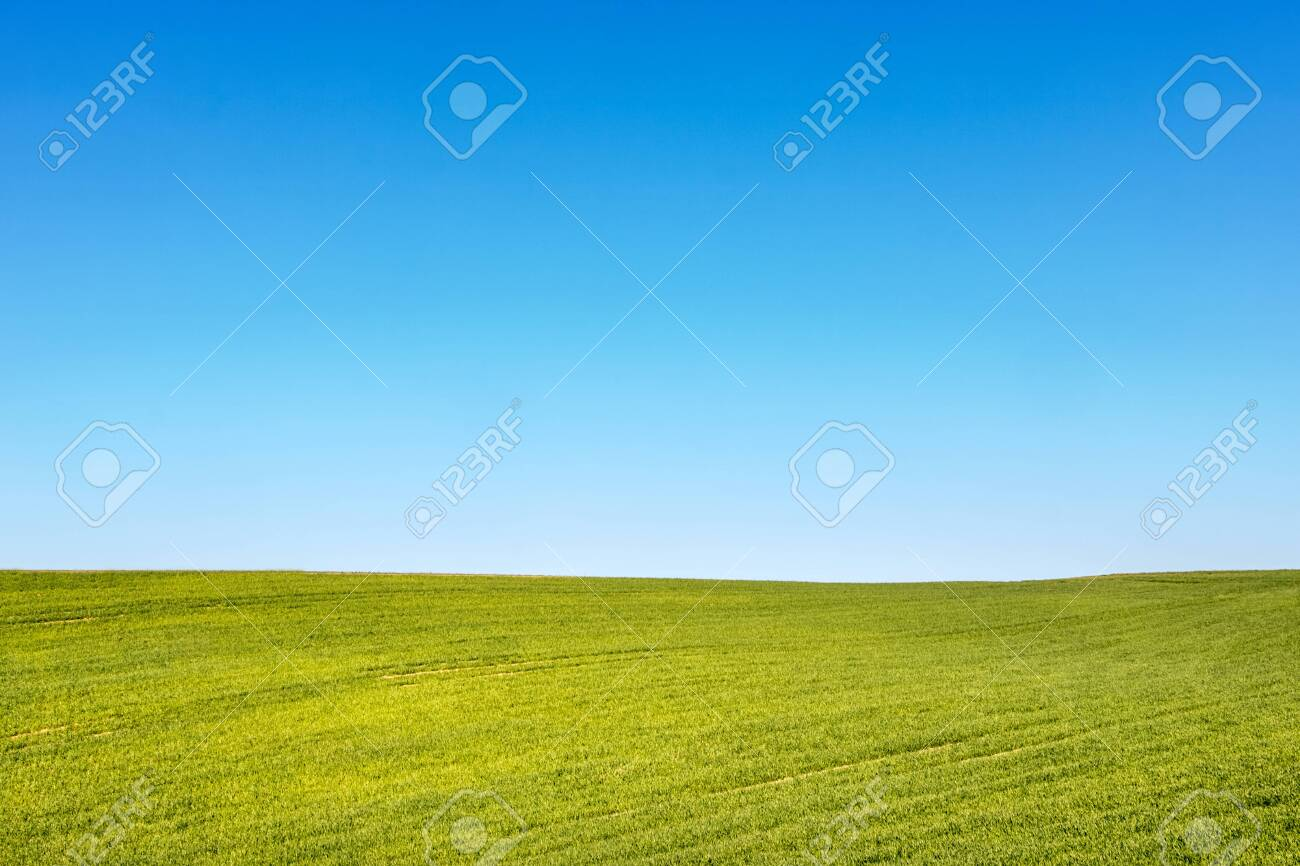 Minimalist shot of spring or summer landscape with green field and blue sky - place for your text. Czech Republic, Europe. - 121427827