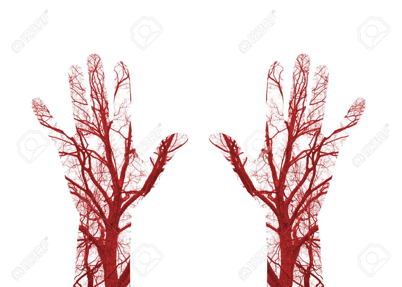 Close up human blood vessels in male hand Stock Photo - 52935898