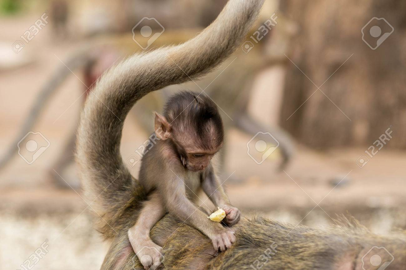 Monkeys Cute Baby Monkey Stock Photo Picture And Royalty Free