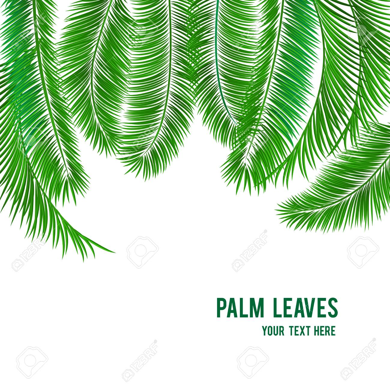 Tropical Palm Tree Background Banner Template Vector Illustration