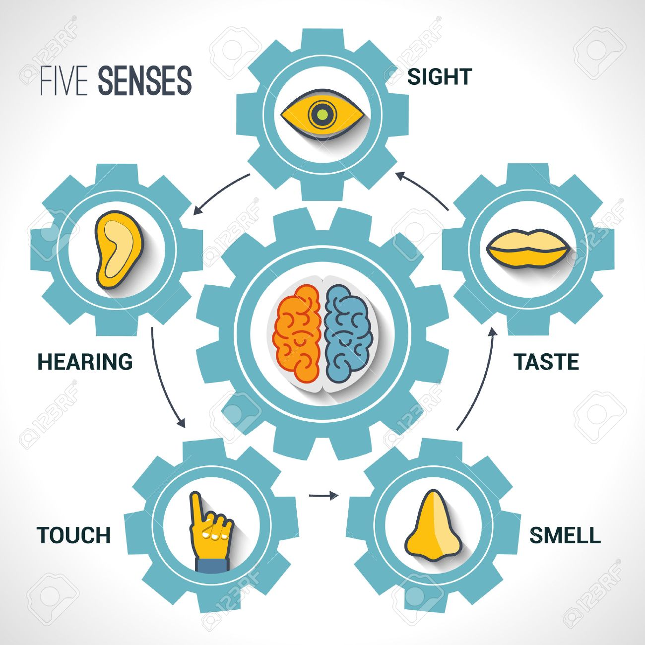 290 Five Senses Stock Vector Illustration And Royalty Free Five ...