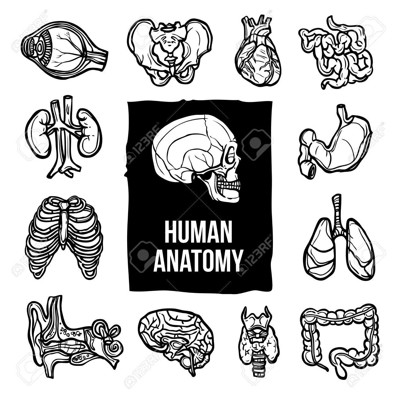 Human Anatomy Internal Body Organs Sketch Decorative Icons Set ...
