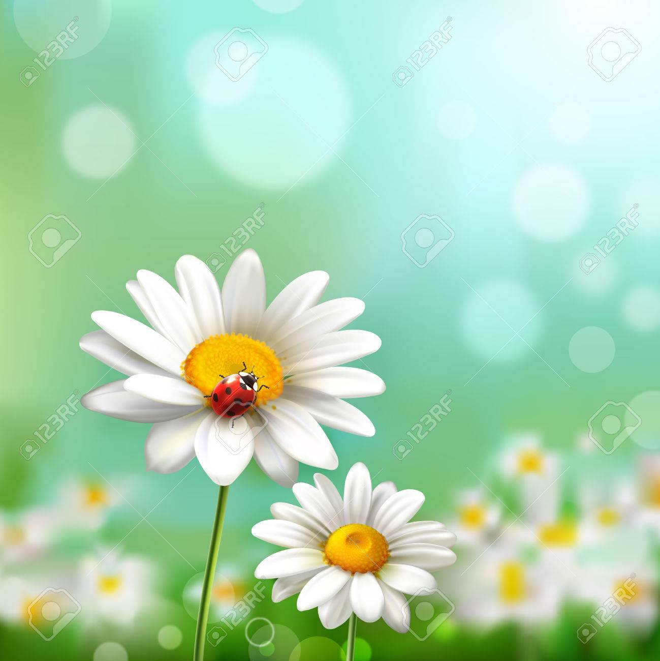 Summer meadow background with realistic daisy flower and ladybug vector illustration - 36519942