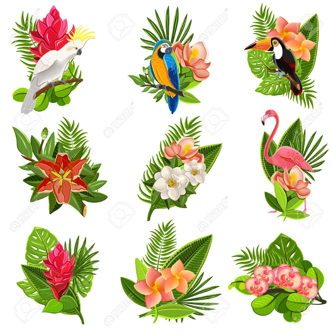 Exotic Tropical Flowers And Birds Icons Collection With Beautiful