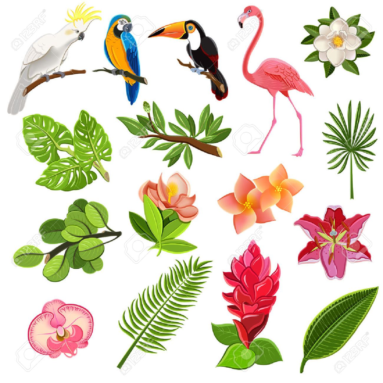 Plant top view vector in group download free vector art stock - Plant Exotic Tropical Leaves And Parrots Pictograms Collection With Orchids Hibiscus And Magnolia Flowers Buds