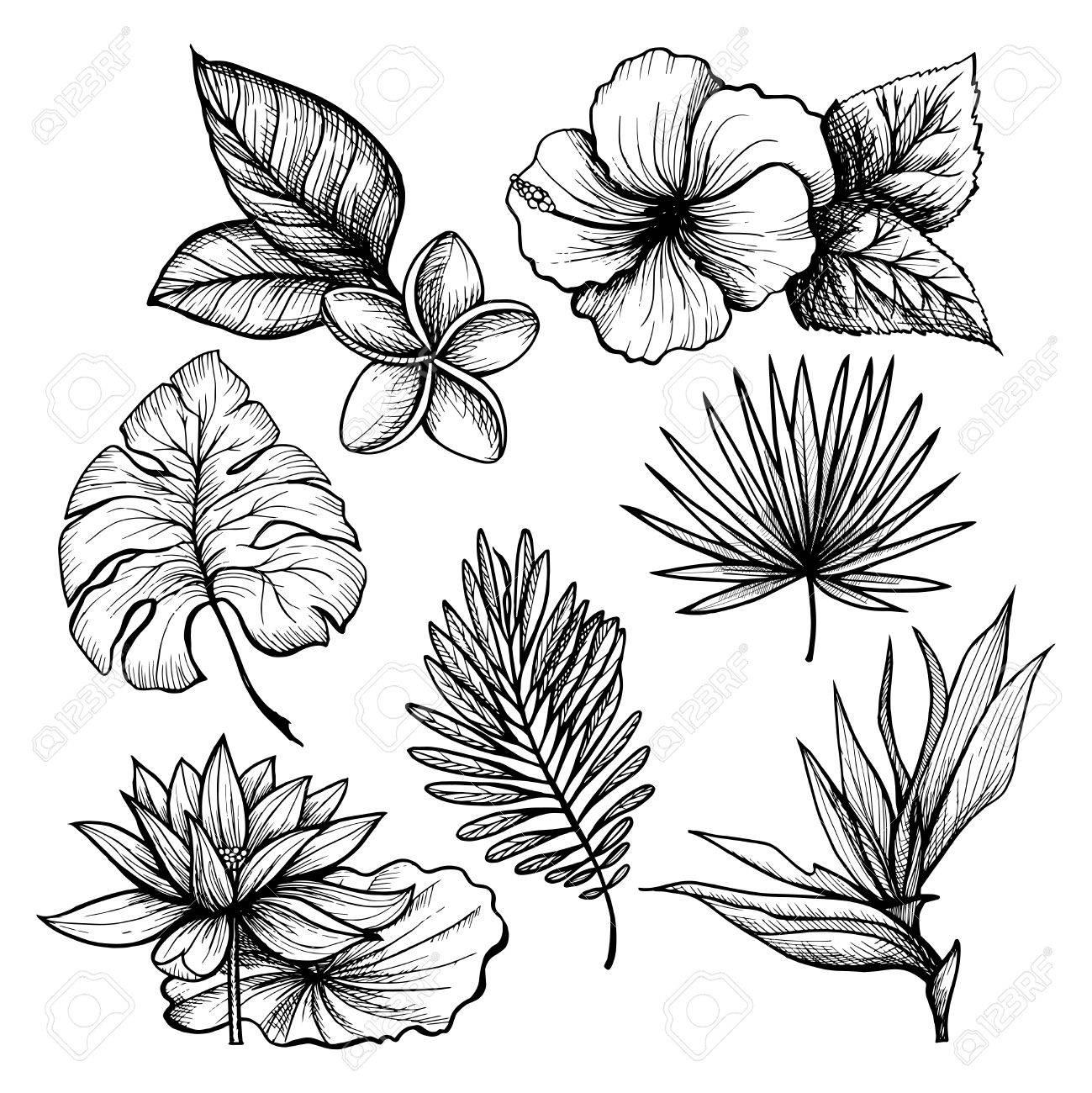 Dessin Fleur Tropicale Noir Et Blanc