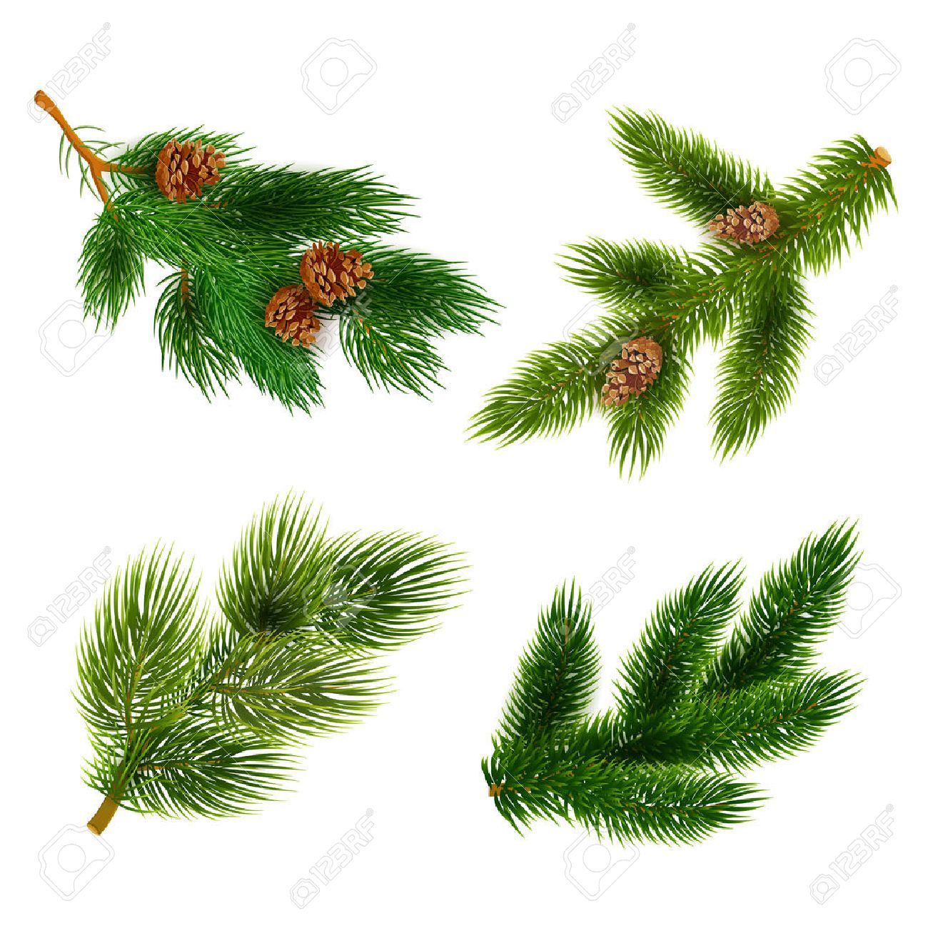 Pine tree branches with cones for chrismas decorations 4 icons set composition banner realistic abstract vector illustration - 45805683