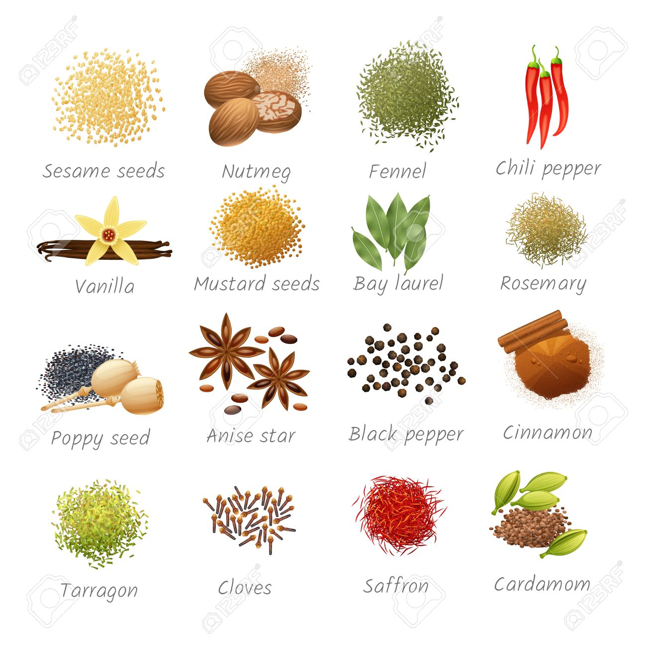 Icons set with titles of piquant food ingredients and fragrant spices realistic isolated vector illustration - 50339359