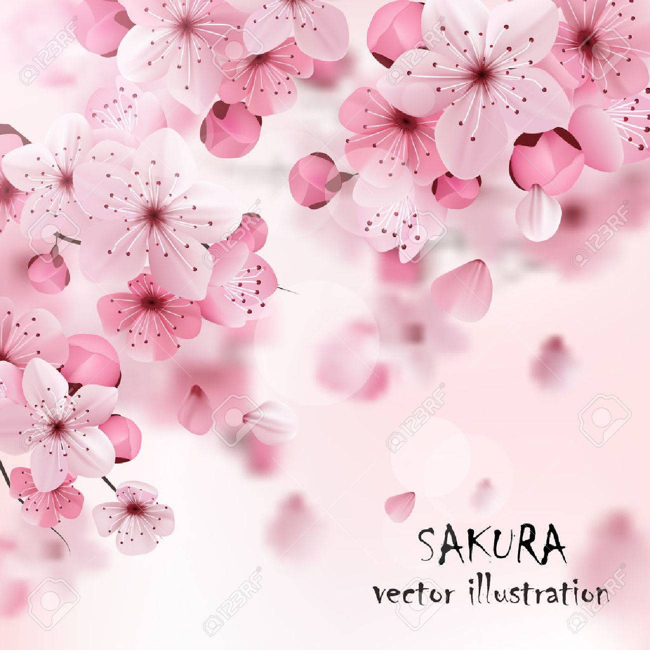 Beautiful print with blossoming dark and light pink sakura flowers and title vector illustration - 50339430