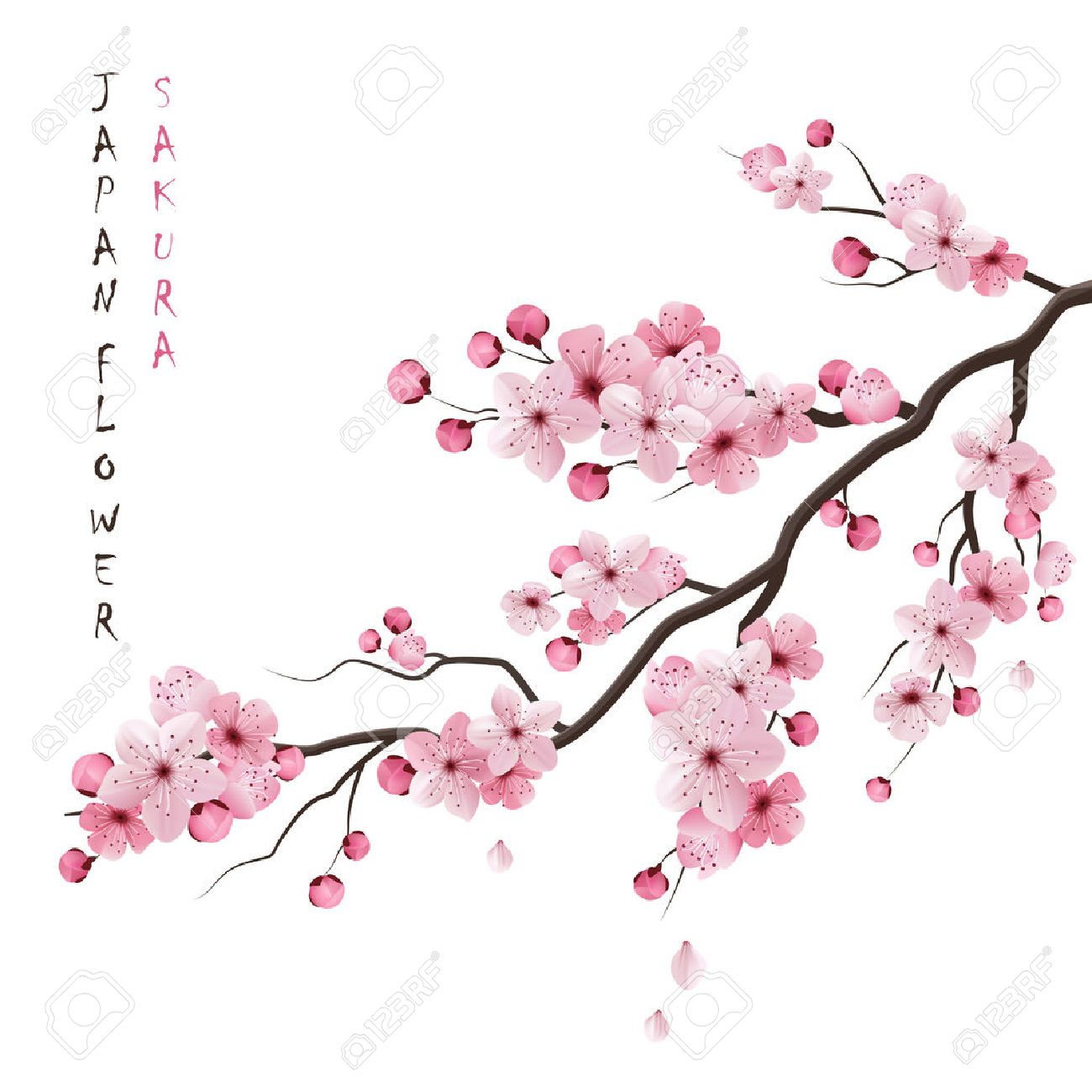 Realistic sakura japan cherry branch with blooming flowers vector illustration Stock Vector - 50704476