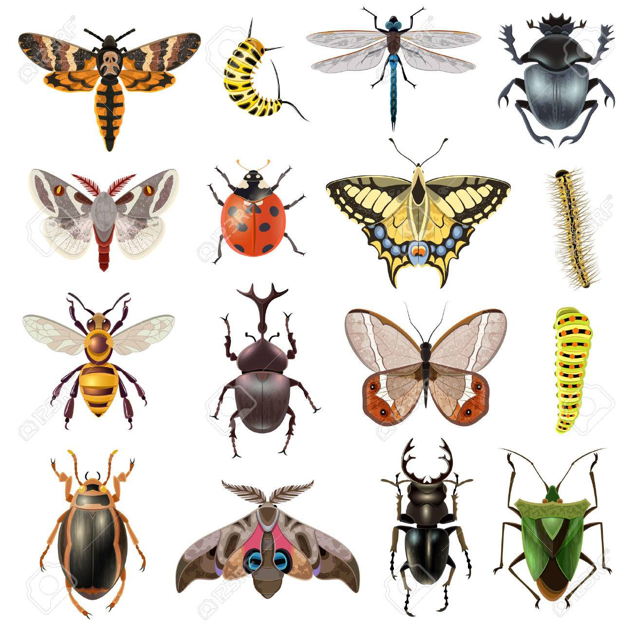 Insects realistic icons set with butterfly and beetles isolated vector illustration - 51757448