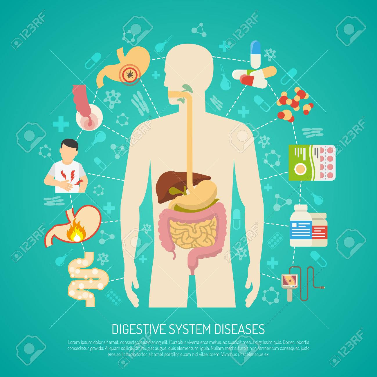 digestive system diseases with human body on green background, Muscles