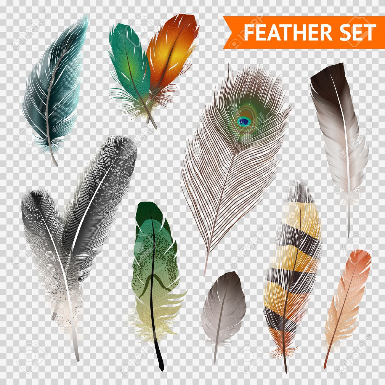 Bird feathers realistic set on transparent background isolated vector illustration - 53864489