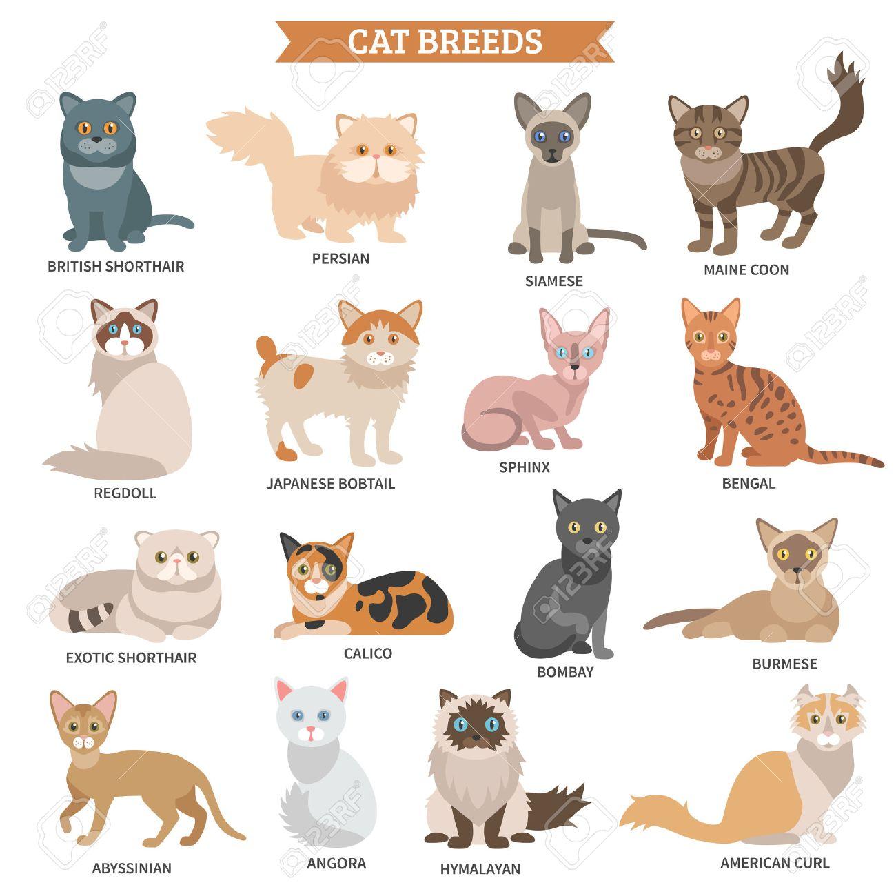 猫の品種フラット アイコンかわいい動物文字分離ベクトル イラスト