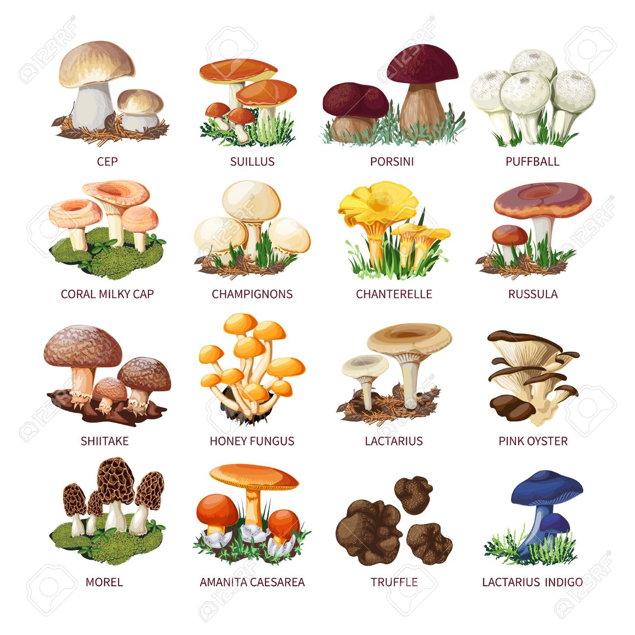 Colorful Forest Wild Collection Of Assorted Edible Mushrooms ...