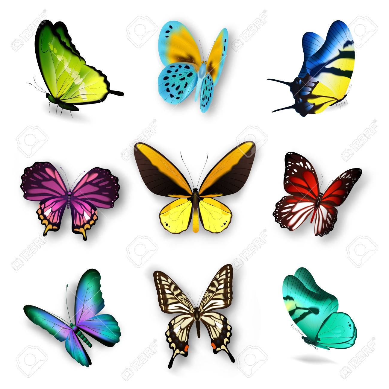 Realistic Set With Various Colorful Butterflies Isolated On White