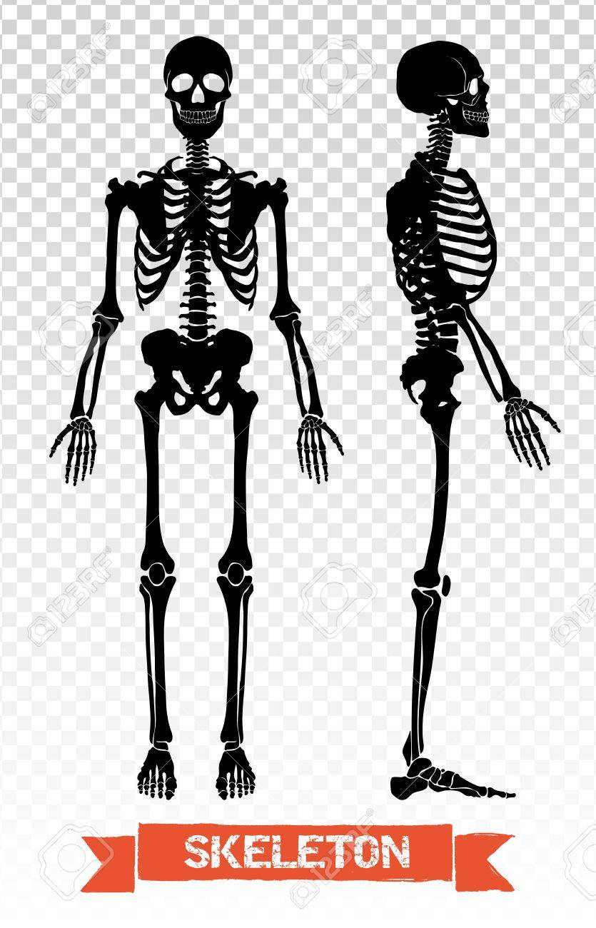 Two Black Human Skeleton Silhouettes Front And Side View Isolated