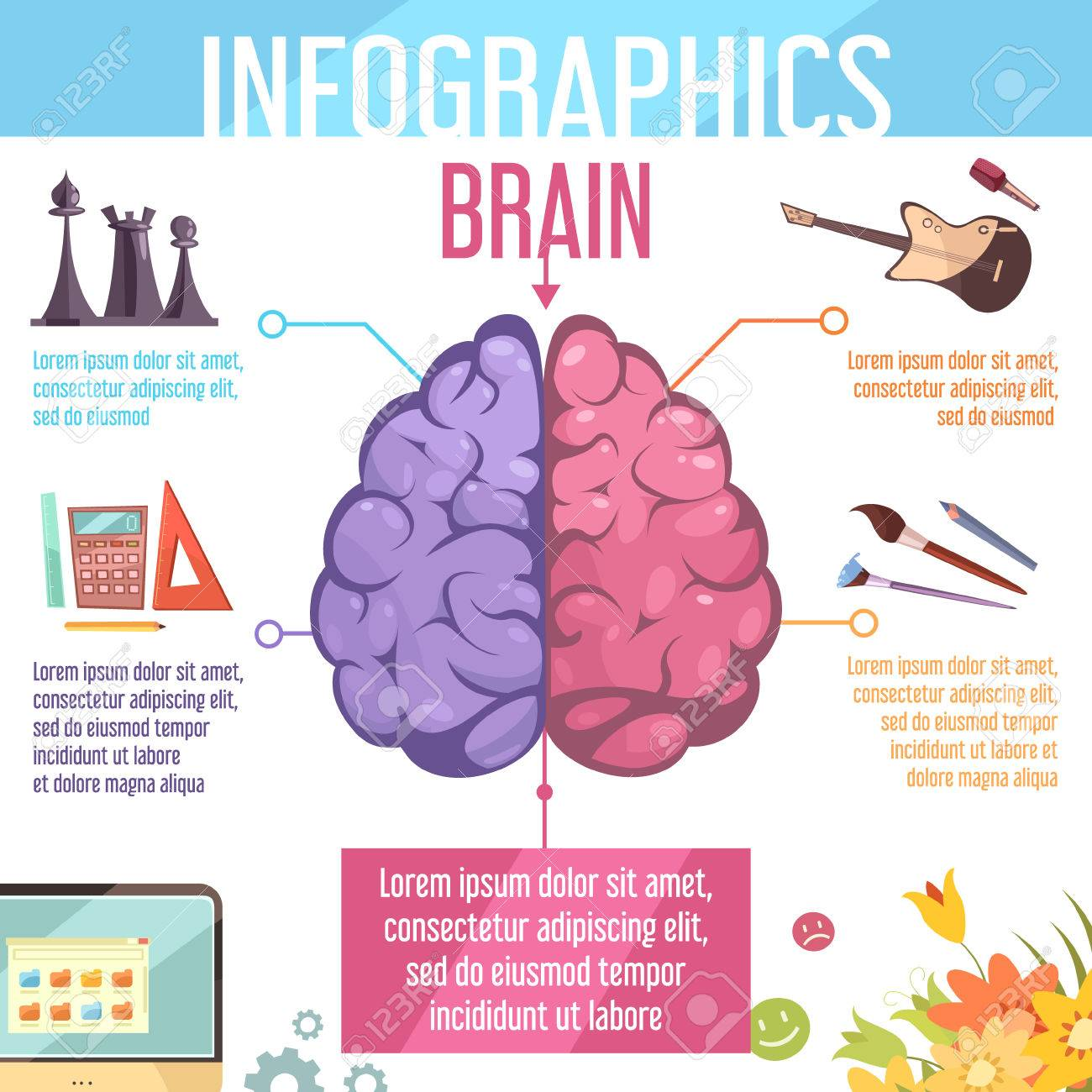 Menschliches Gehirn Links Und Rechts Zerebralen Hemisphären ...
