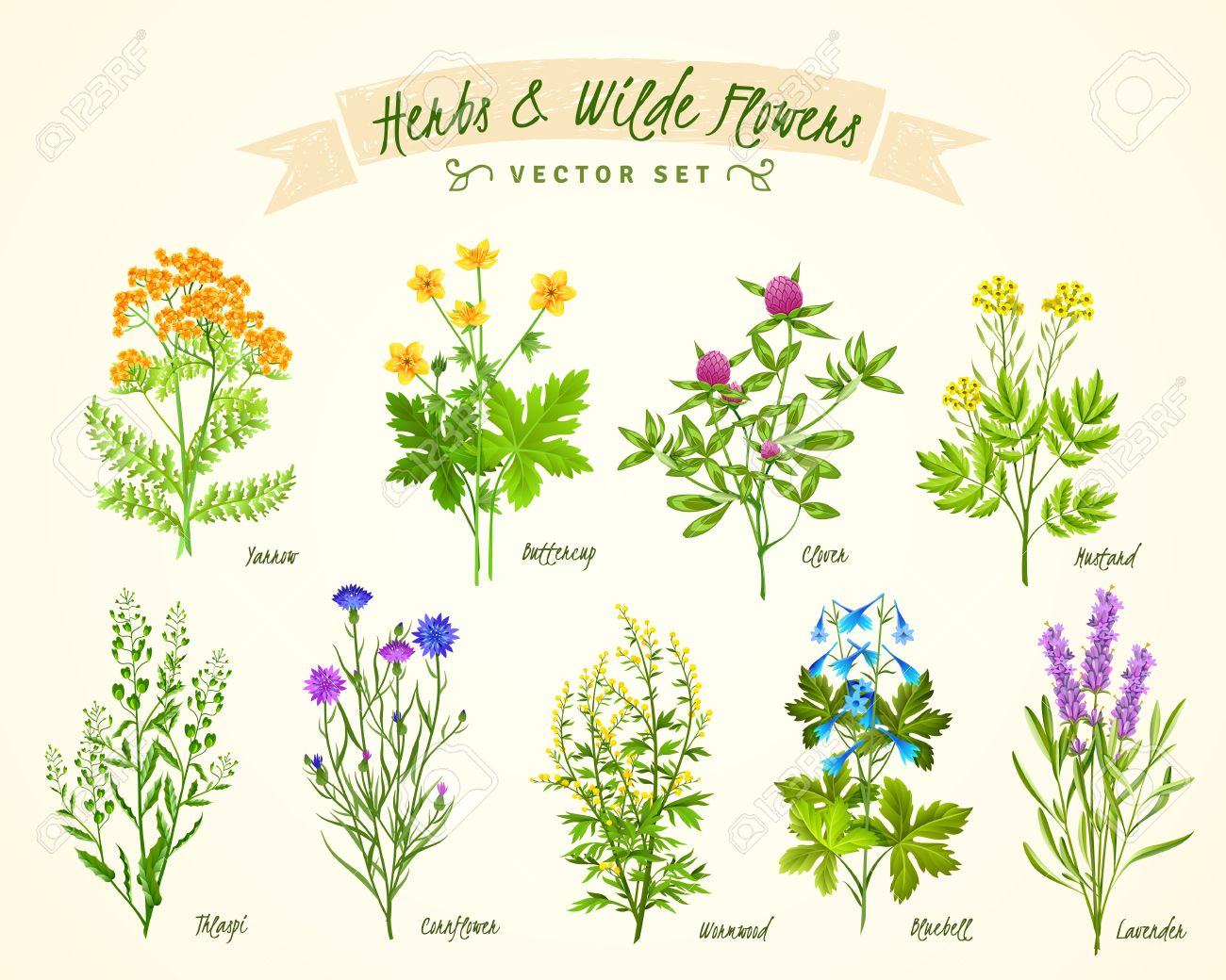 Flat White Background With Set Of Various Blooming Herbs And
