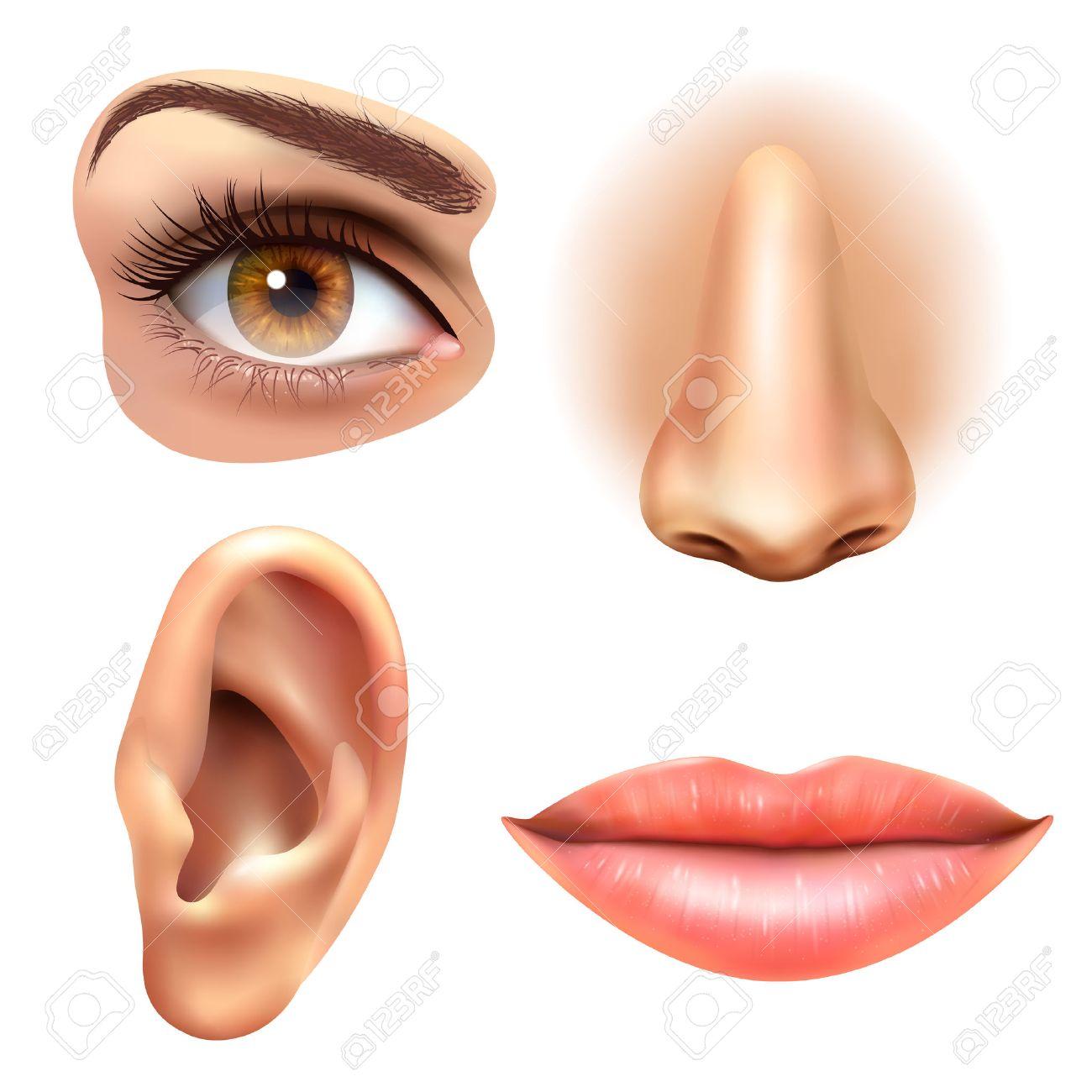 Human Face Parts 4 Sense Organs Icons Square Collection Of Eye ...
