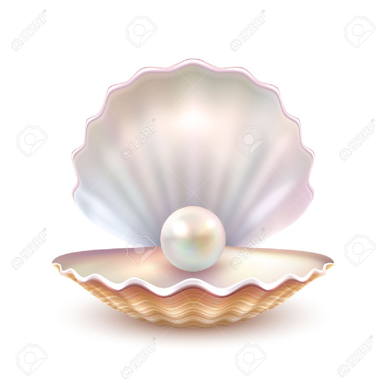 Finest quality beautiful natural open pearl shell close up realistic single valuable object image vector illustration Stock Vector - 66734955