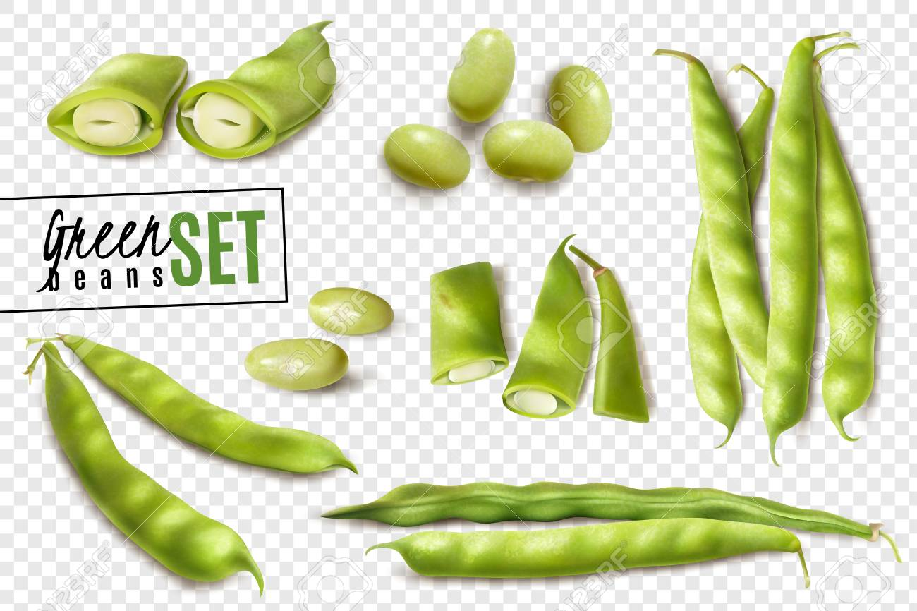 Fresh farmer market organic green beans realistic set with whole and cut pods transparent background vector illustration - 110427144