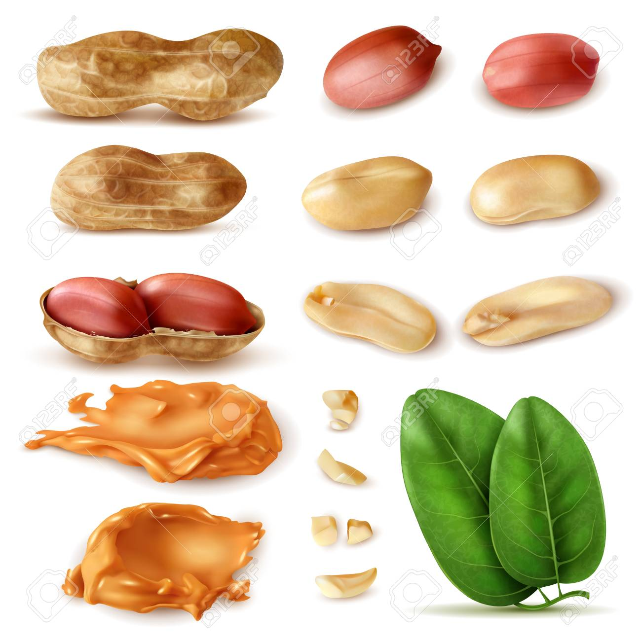 Realistic peanut set of isolated images of beans in shell with green leaves and peanut butter vector illustration - 112468116