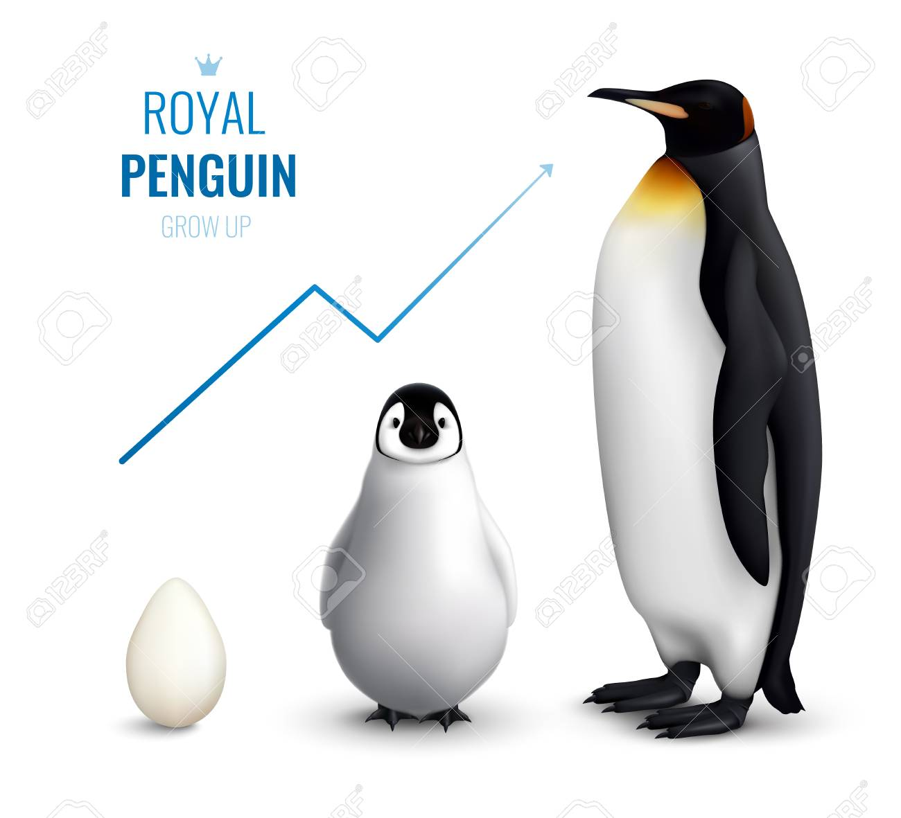 Royal penguins life cycle realistic poster with egg chick adult and indicating growth up arrow vector illustration - 112468295