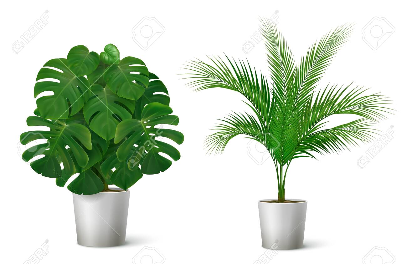 Realistic Composition With Two Potted Tropical Plants With Big Royalty Free Cliparts Vectors And Stock Illustration Image 128161124