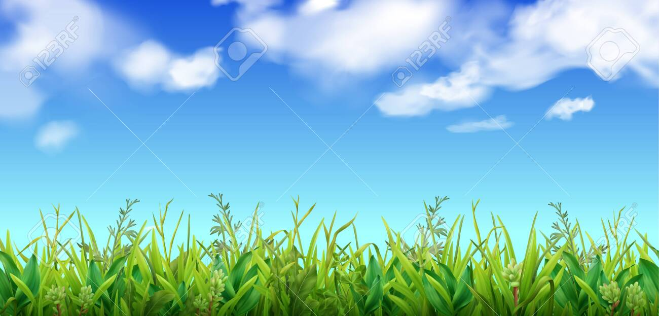 Green grass and blue sky with clouds background realistic vector illustration - 146615232