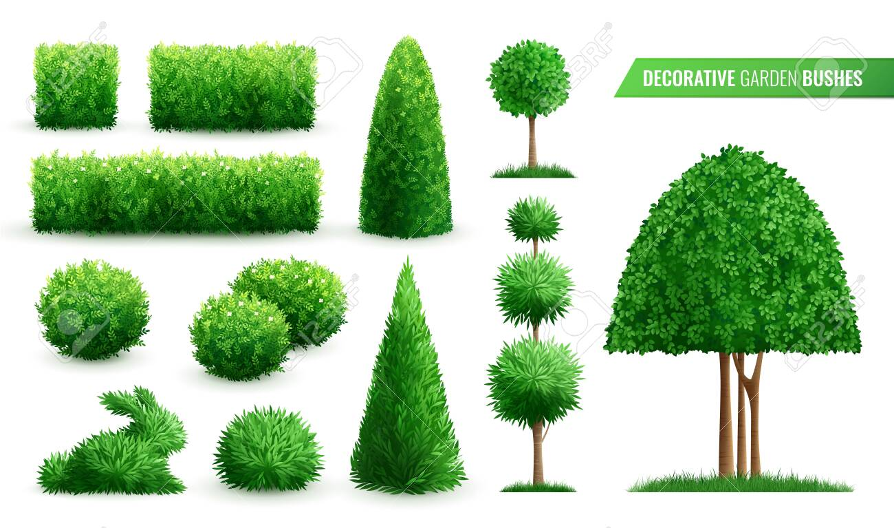 Decorative Garden Bushes Realistic Icon Set With Different Shapes Royalty Free Cliparts Vectors And Stock Illustration Image 156781213