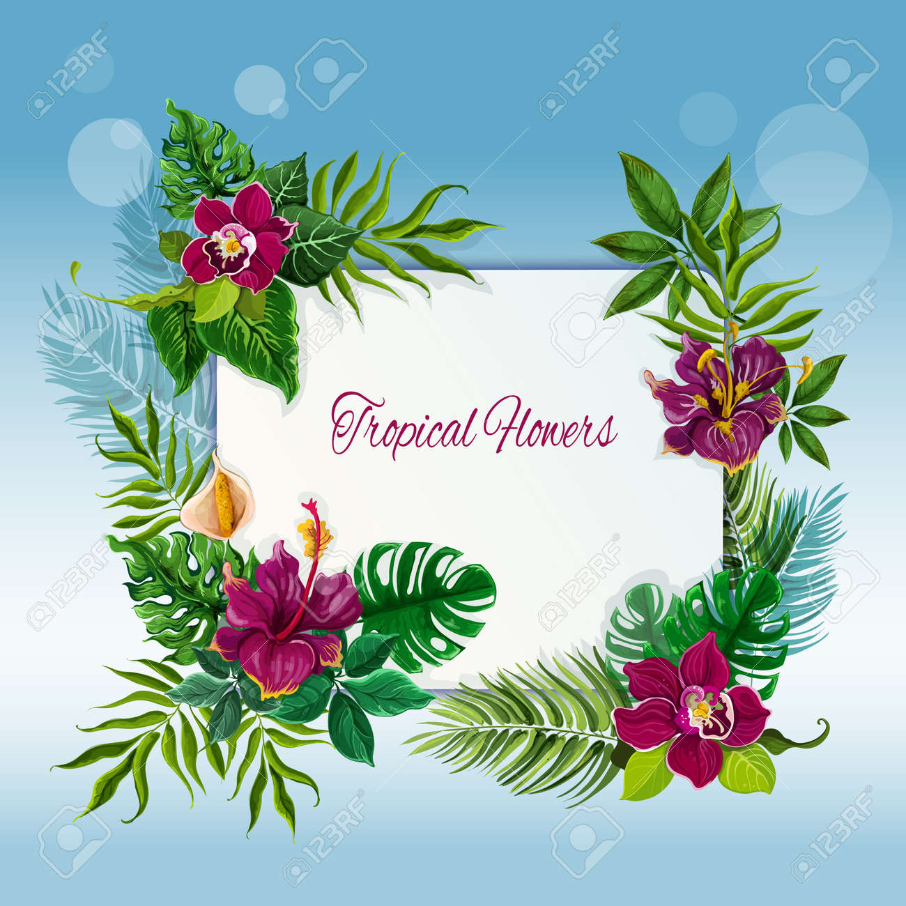 Exotic tropical green leaves frame for message or note with hibiscus and orchid flowers abstract vector illustration - 165243076