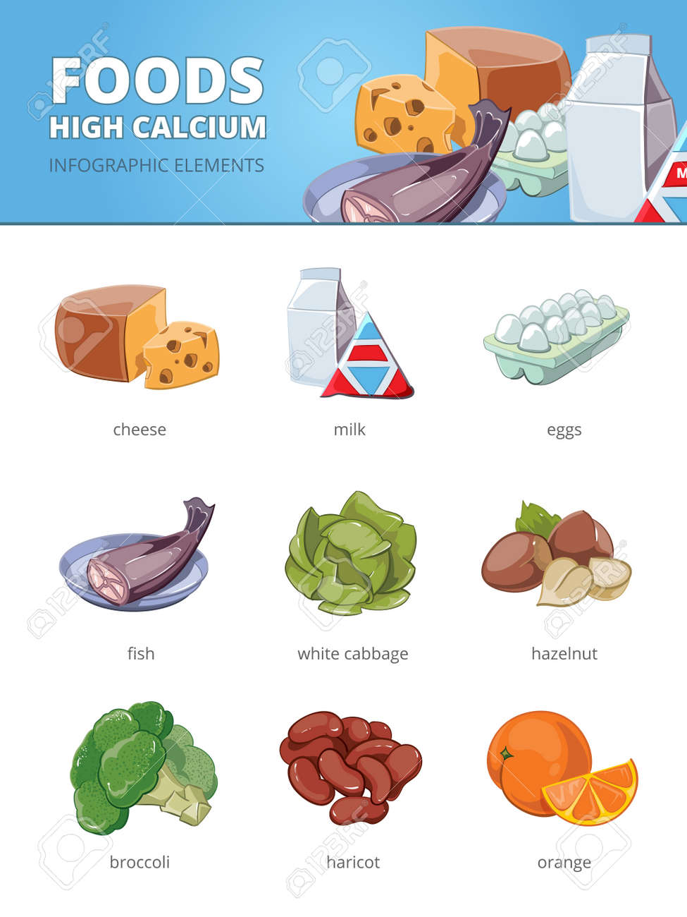 High calcium and vitamins foods. Haricot hazelnut cabbage, egg fish broccoli orange cheese. Vector infographic illustration - 166762617