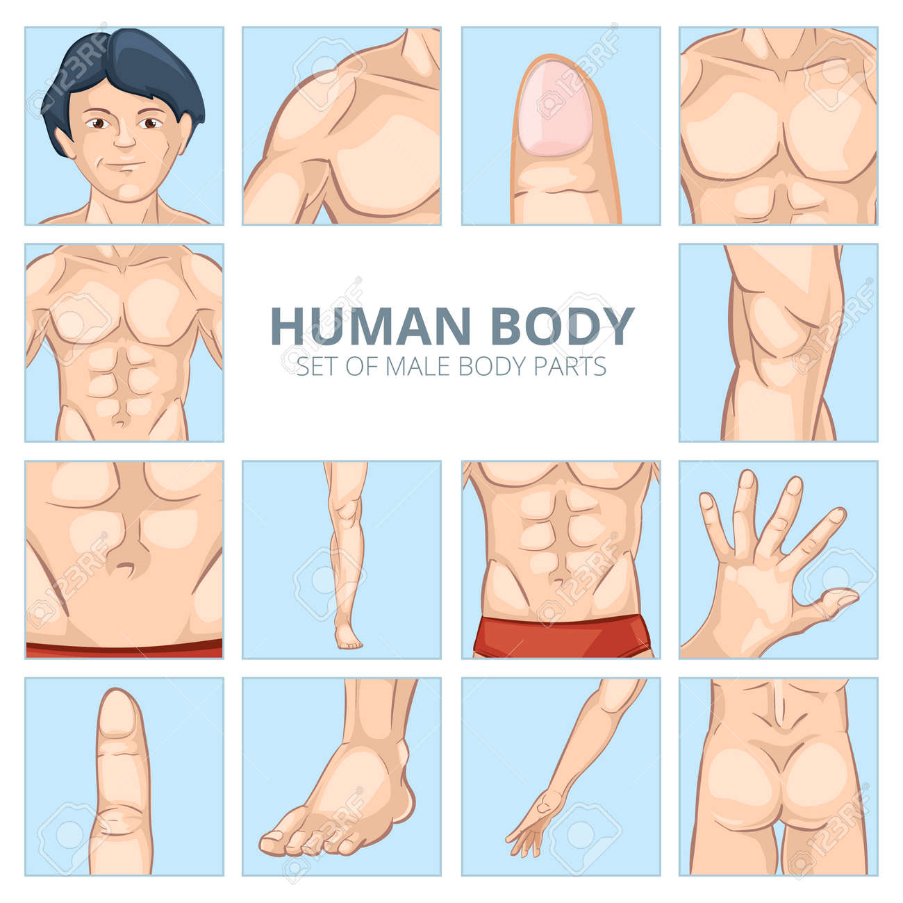 Male body parts in cartoon style. Human chest, knee and abdomen, foot and hand, ass, finger and phalange. Vector illustration icons set - 166800452