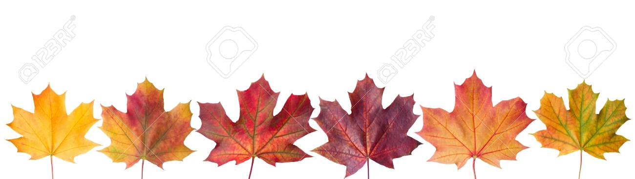 Ð¡ollection beautiful colorful autumn leaves isolated on white background - 110302787