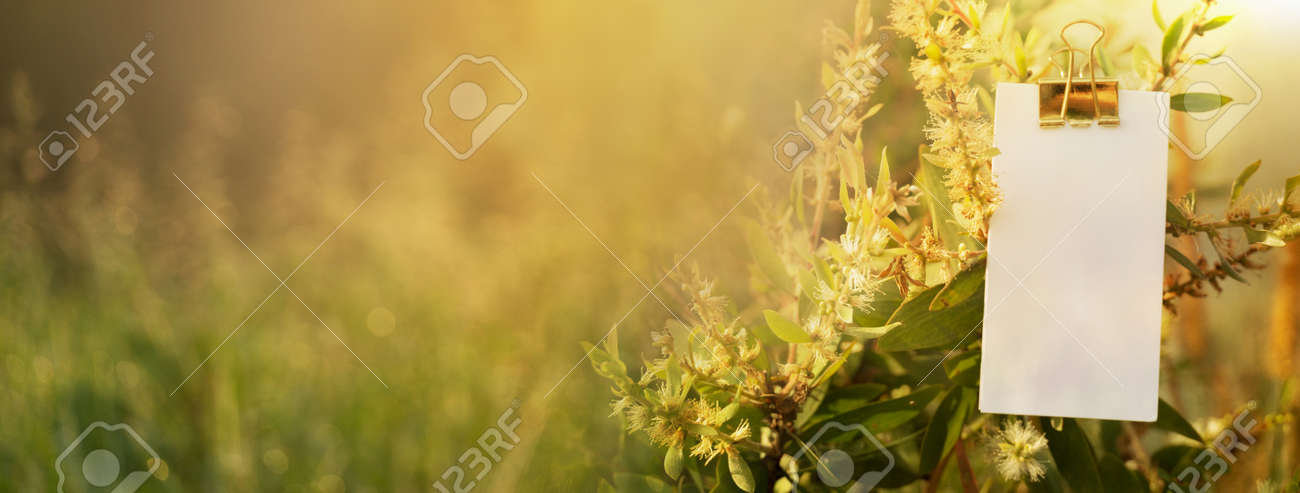 white paper note with blur yellow green grass in soft morning light meadow field nature banner background - 172410137