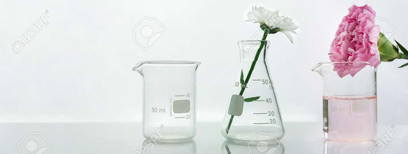 glass flask and beaker with pink white flower and green plant biotechnology cosmetic science white web banner background - 173776834