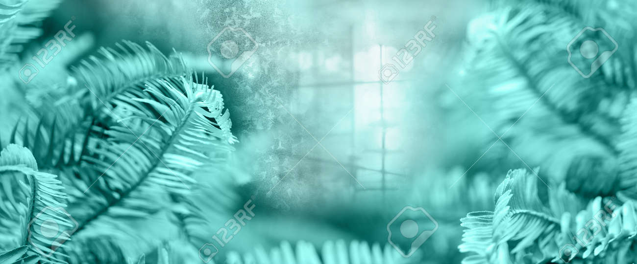 mint blue fern leave with soft light and white snowflake nature banner background - 173812620