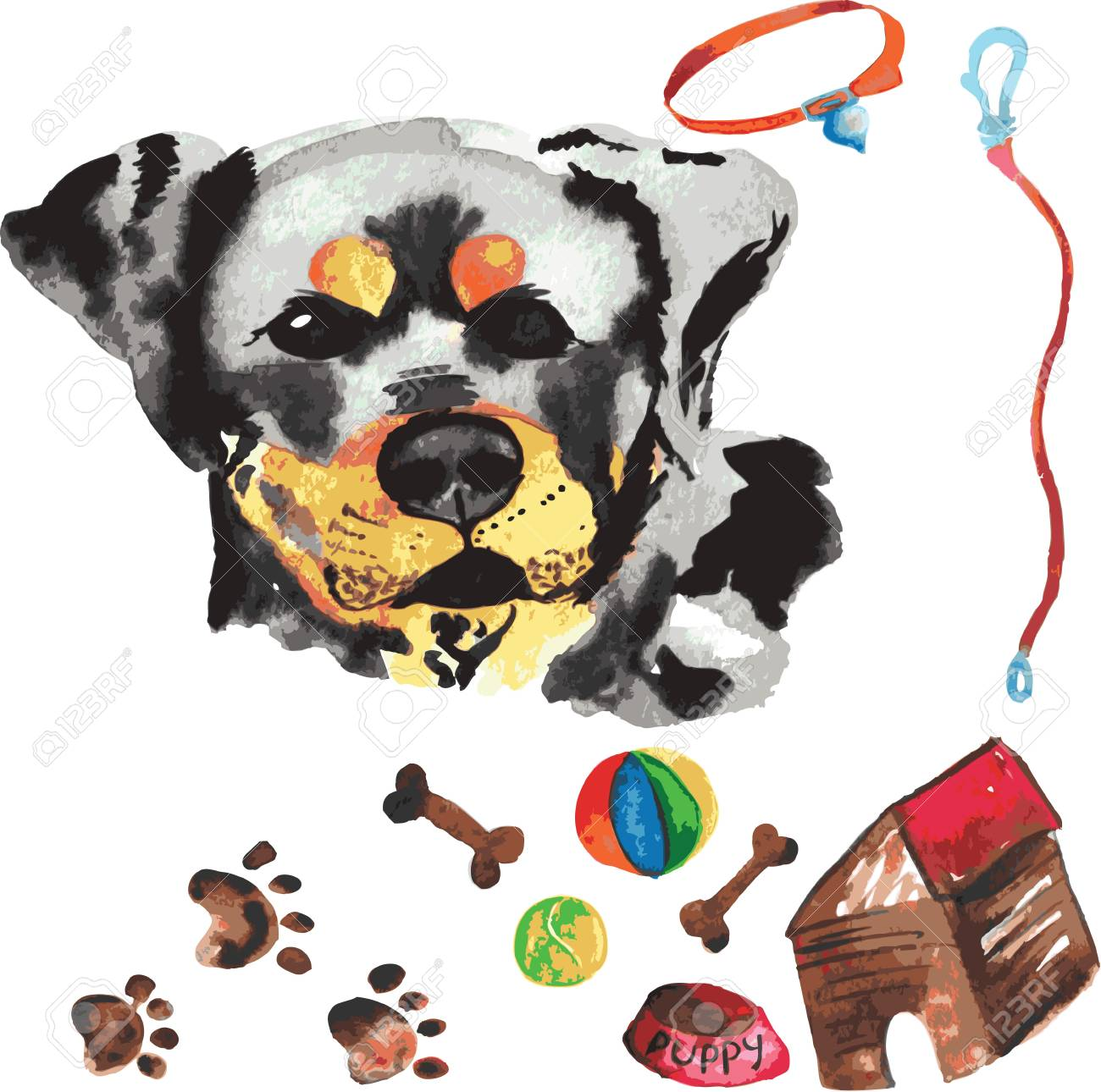 Veterinary Kit Comprising Rottweiler And Accessories For Dogs