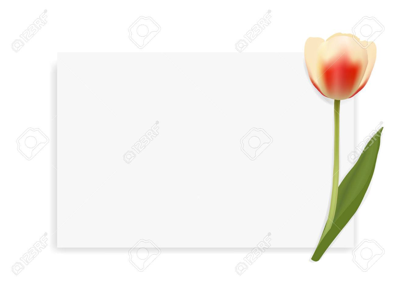 Tulip Mockup. Top View With Blank Paper. Template Layout Mockup ...