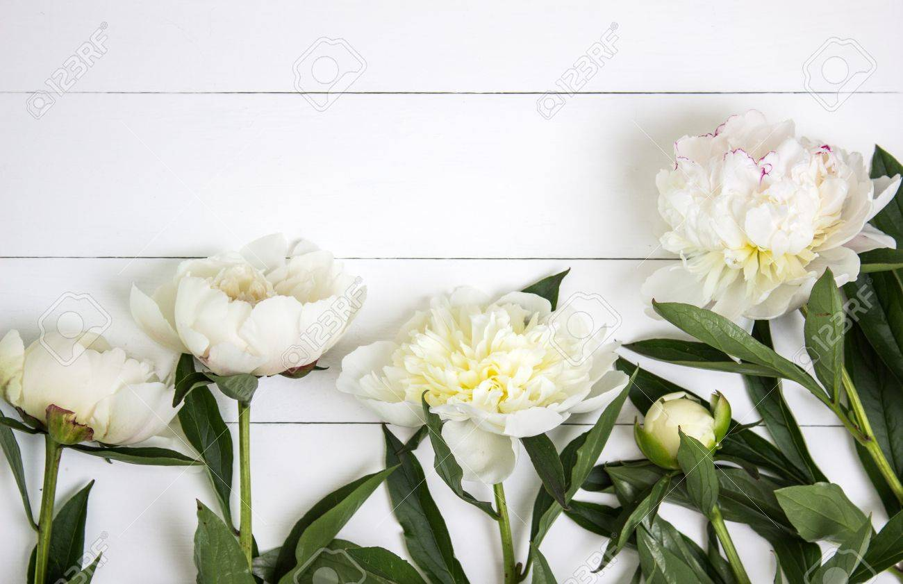 White peonies flower on white rustic wooden background with blank stock photo white peonies flower on white rustic wooden background with blank space for text mockup top view mightylinksfo