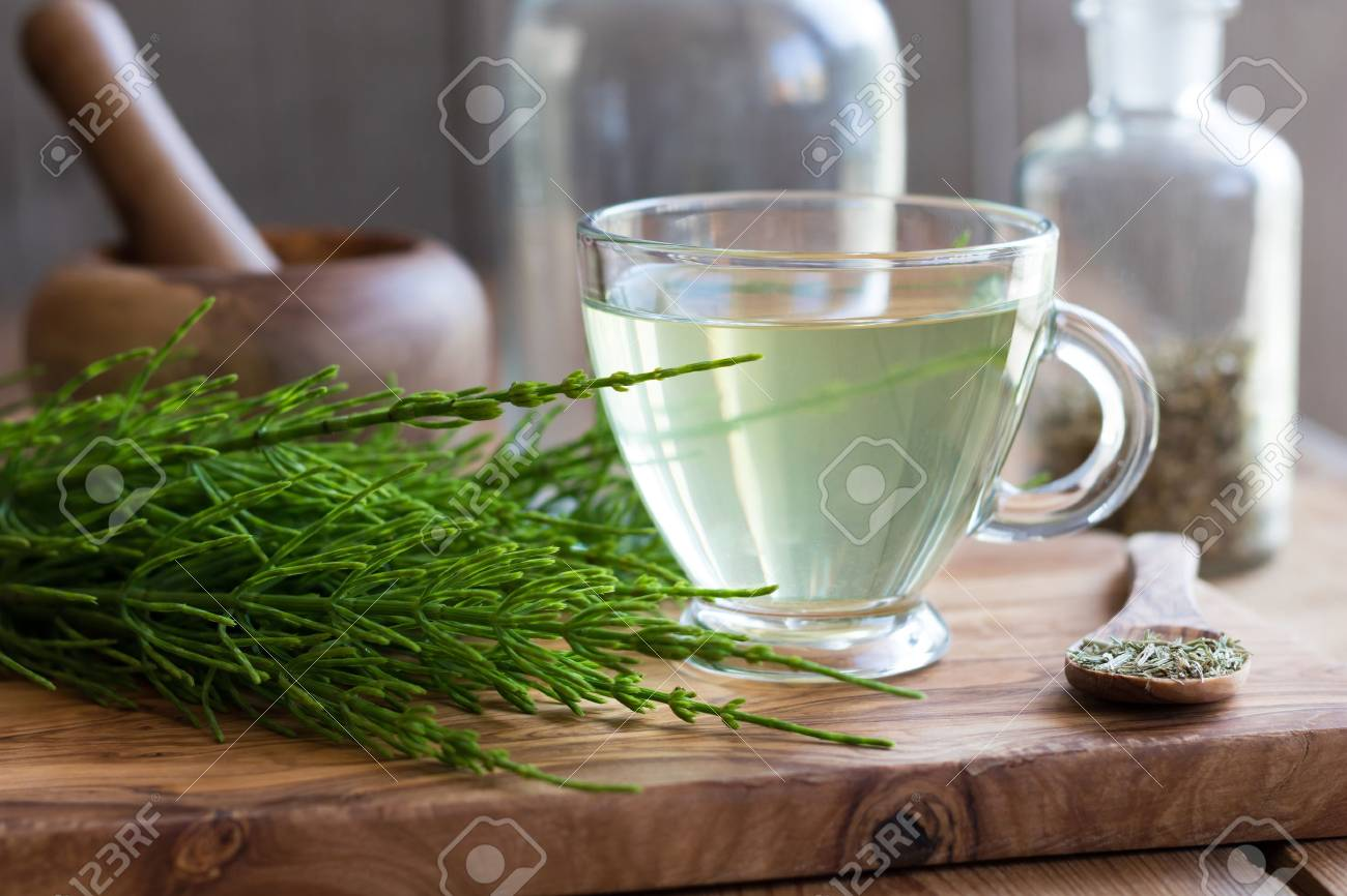 A cup of horsetail tea with fresh and dried horsetail plant - 78607710
