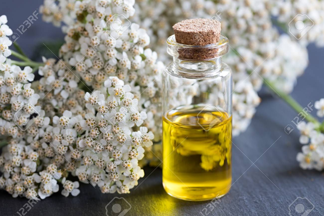 A bottle of essential oil with fresh yarrow flowers on a dark background - 81858302