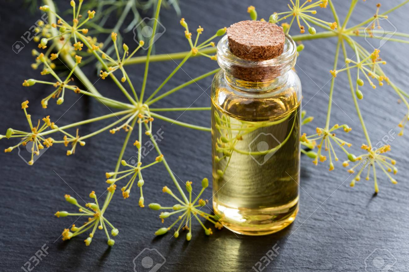 A bottle of dill seed oil with fresh dill in the background - 87978431