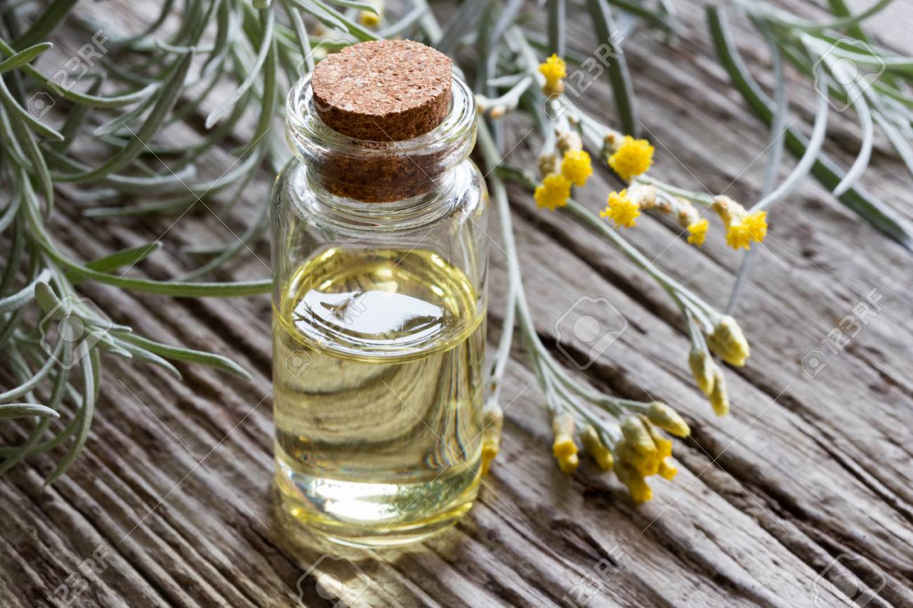 A bottle of helichrysum italicum essential oil with fresh helichrysum twigs on a wooden background - 95108600