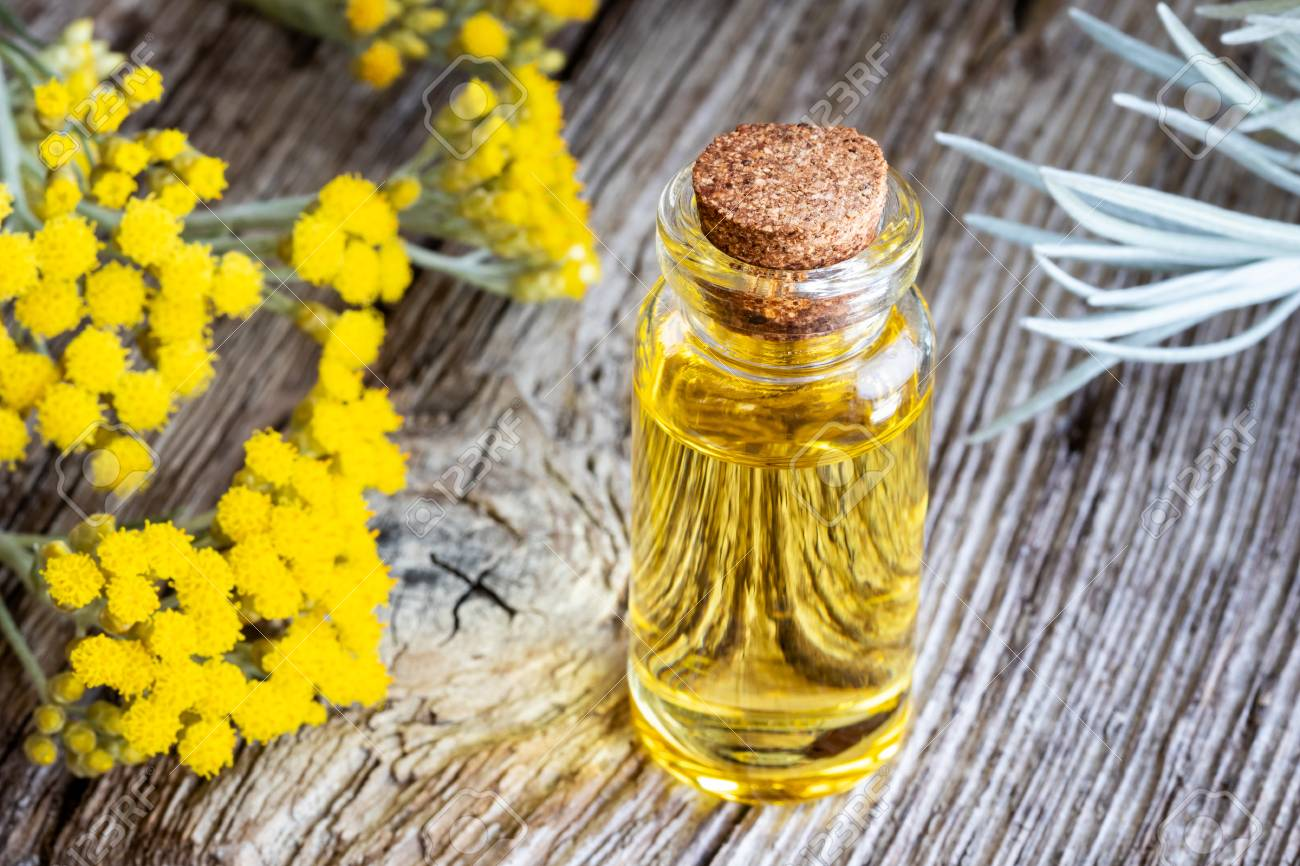 A bottle of essential oil with fresh blooming helichrysum italicum plant - 103292364