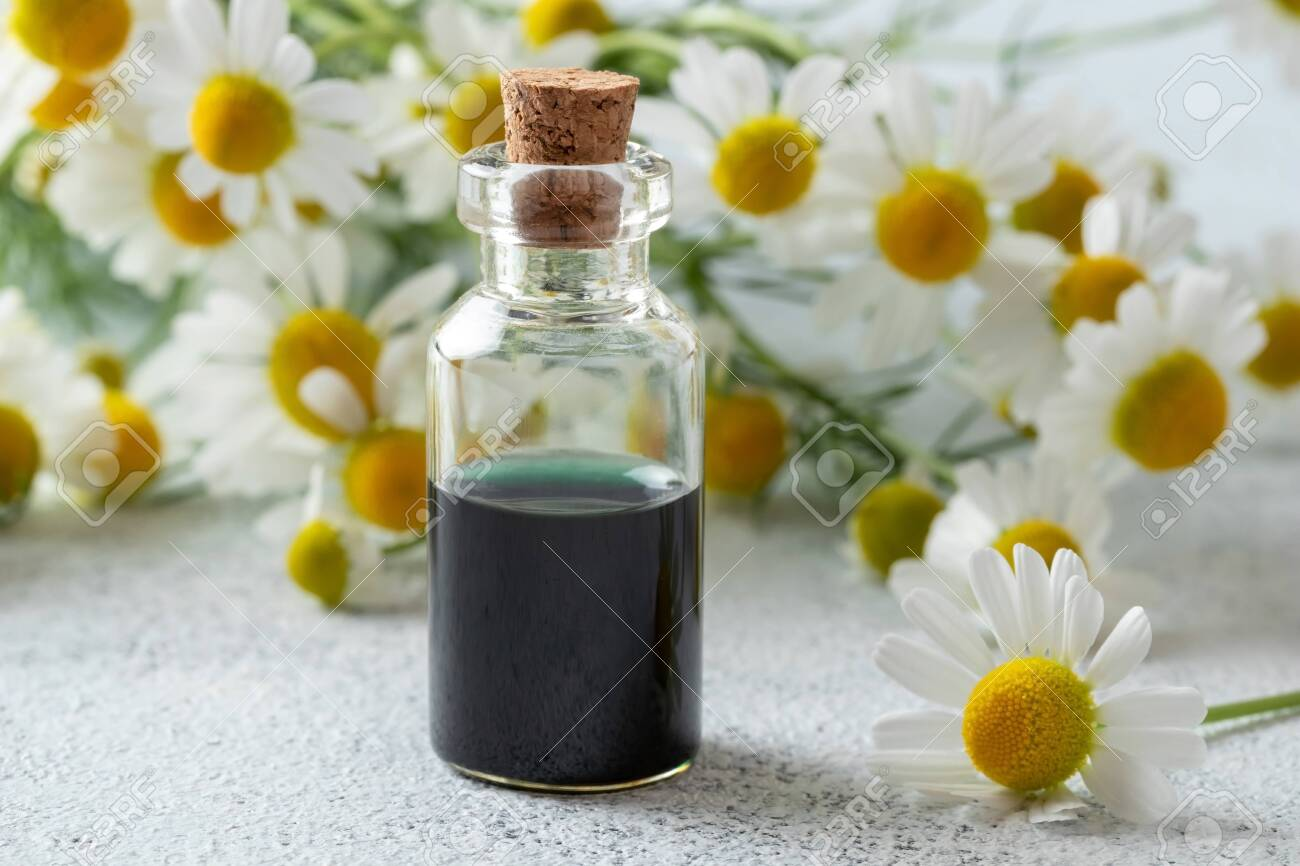 A Bottle Of Dark Blue German Chamomile Essential Oil And Fresh Stock Photo Picture And Royalty Free Image Image 126404801
