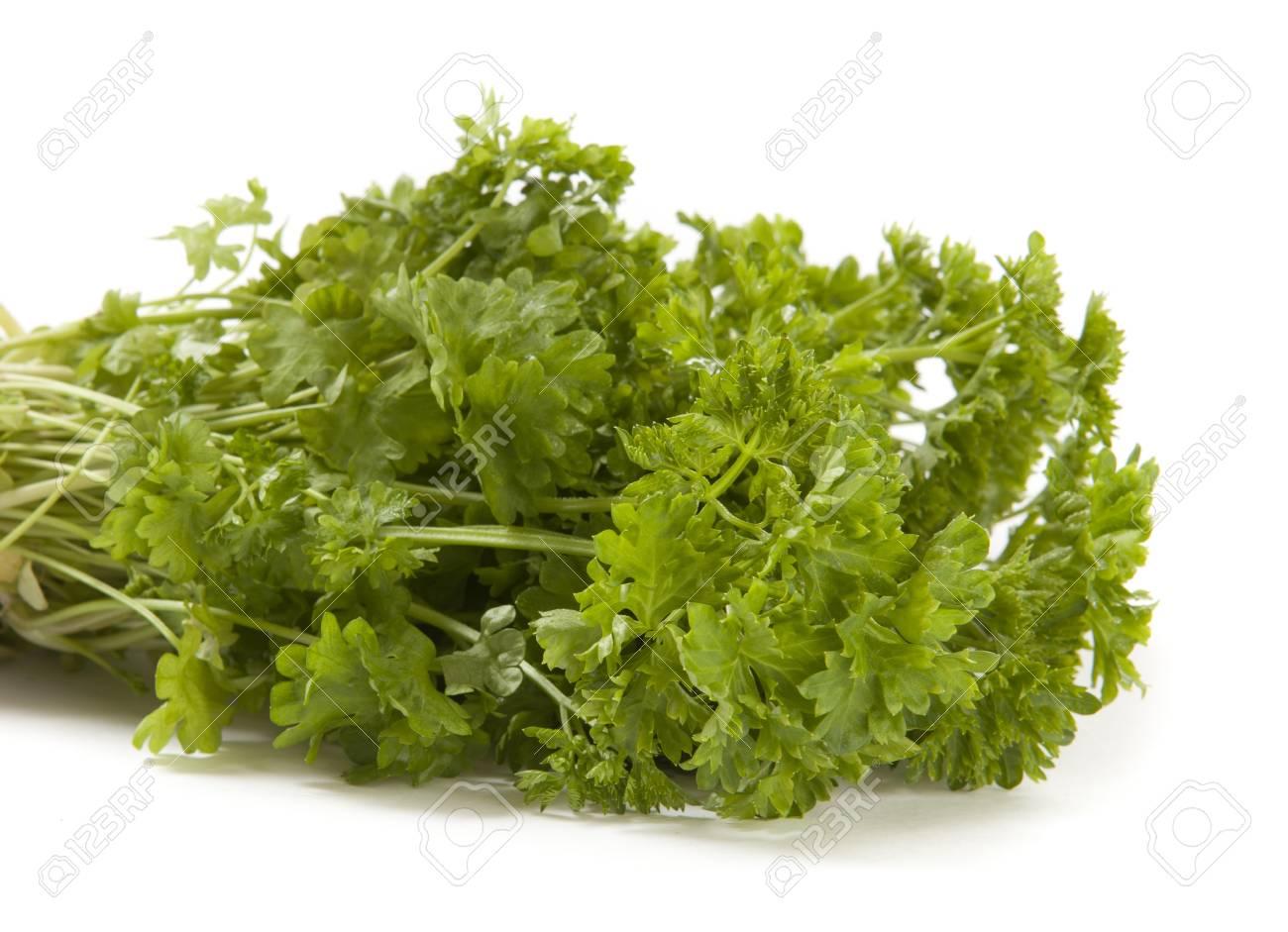 Fresh Green Parsley Isolated on White Background Stock Photo - 11264824