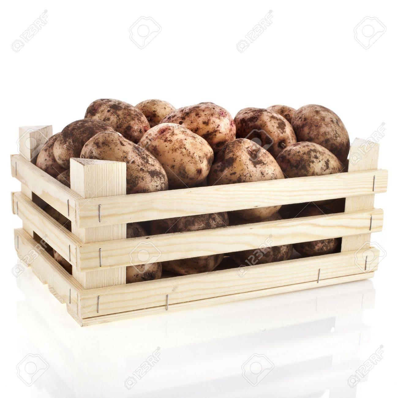 Prix Caisse A Pomme jeunes pommes de terre dans une caisse boîte en bois isolé sur blanc