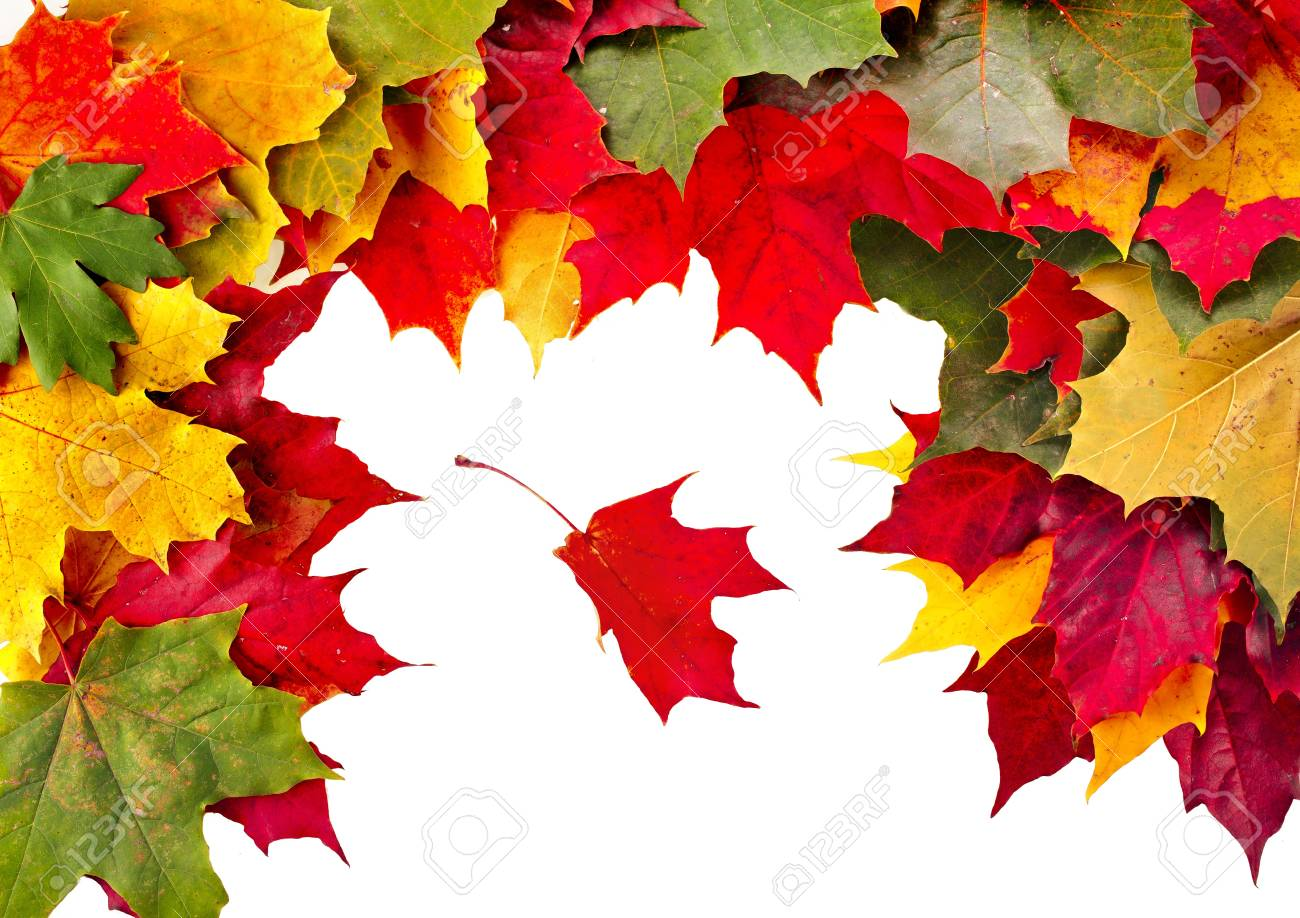 Autumn card of colored falling leafs on white background Stock Photo - 17787633